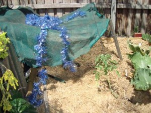 shade-cloth-garden-bed
